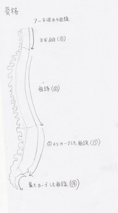 骨格のアーチ