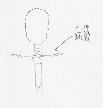 上肢:鎖骨