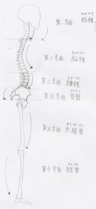 第六弯曲:脛骨