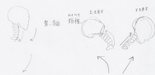 クロッキー-頚椎2