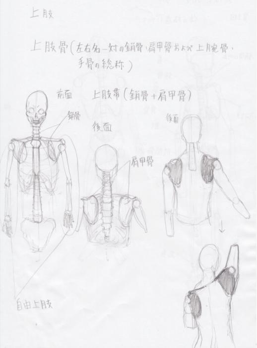 上肢:鎖骨の上がり具合3
