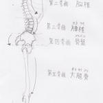 【絵の練習法・上達法】【クロッキー】骨格のカーブ(弯曲)について