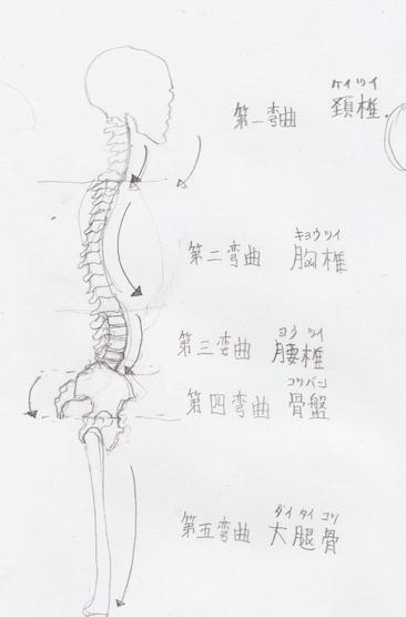 第五弯曲:大腿骨