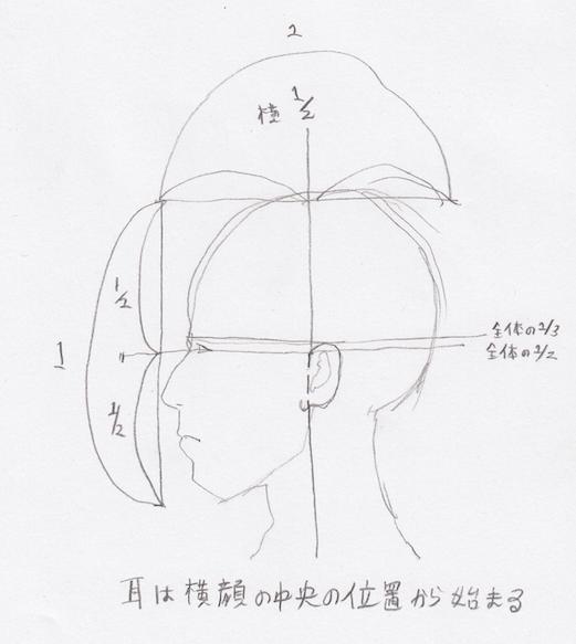 耳のプロポーション