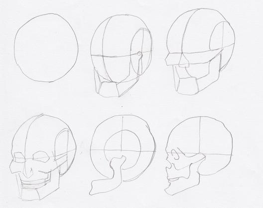 ルーミス 頭蓋骨のプロポーション