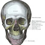 顎(あご)の骨格に関する理解について