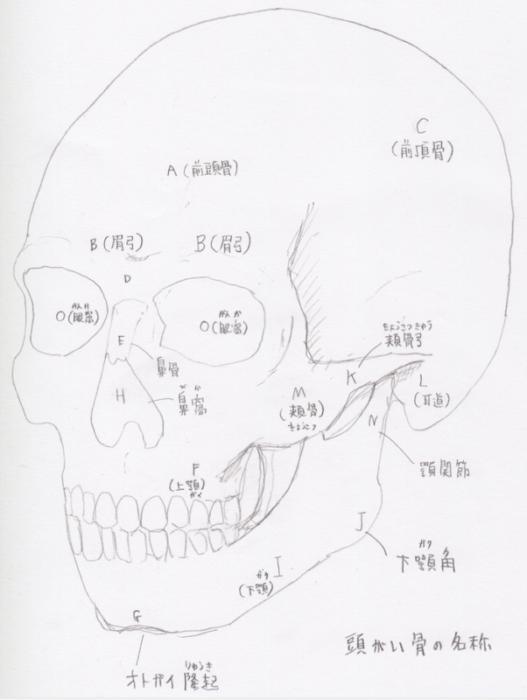 頭蓋の名称