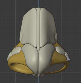 鼻の穴の構造