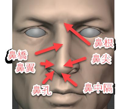 鼻根、鼻橋、鼻尖、鼻中隔、鼻翼