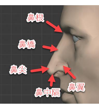 鼻根、鼻橋、鼻尖、鼻中隔、尾翼