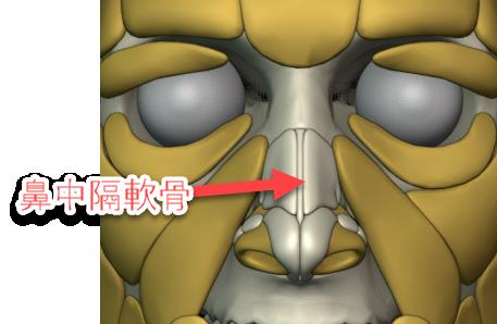 鼻中隔軟骨