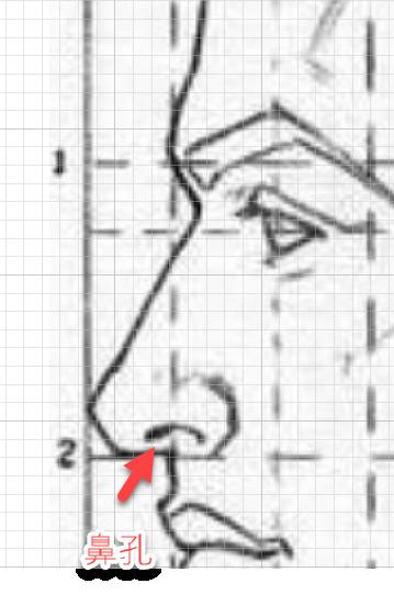 鼻の描き方