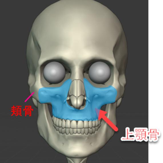 上顎骨のイメージ