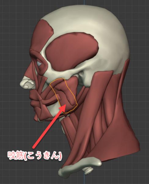 咬筋のイメージ