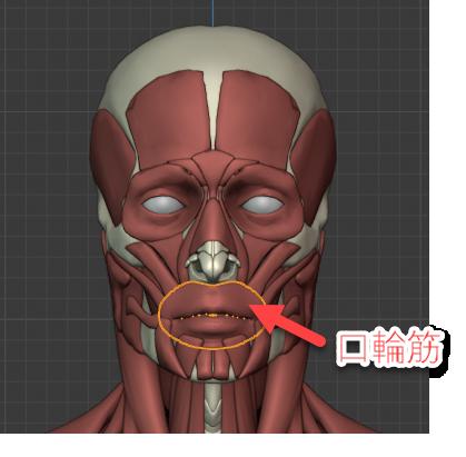 口輪筋の正面画像