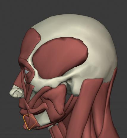 下唇下制筋(側面)