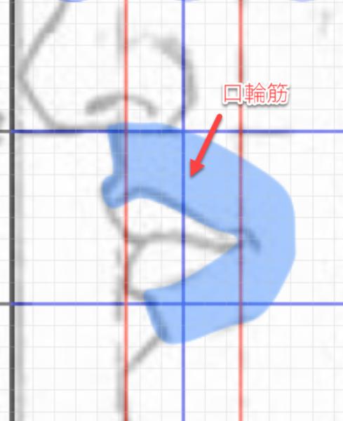 口輪筋と口の描き方