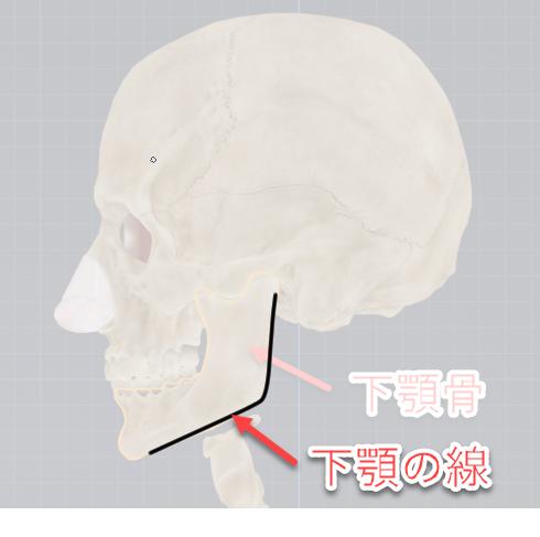 下顎の描き方、分析