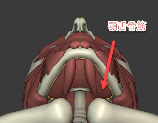 顎舌骨筋(がくぜつこっきん)
