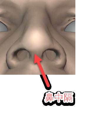 鼻中隔のイメージ