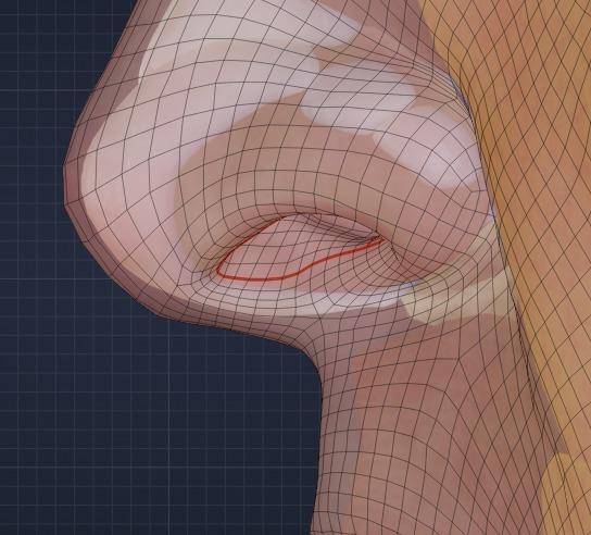 鼻中隔の境界