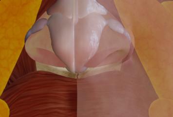 鼻中隔の領域とは