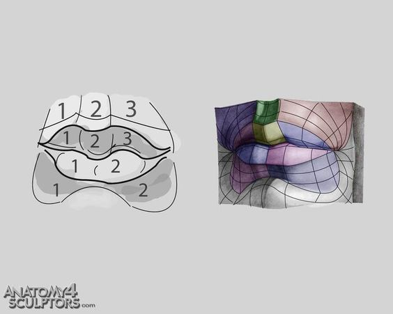 唇の描き方、分析