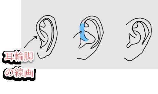 耳輪脚の線画について