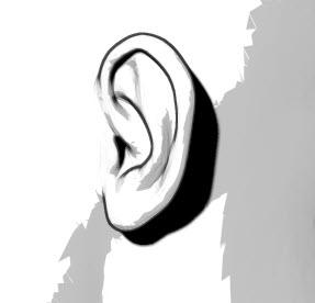 耳輪脚の線画