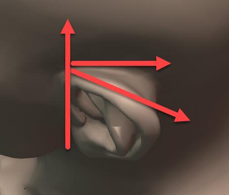 耳の線画について