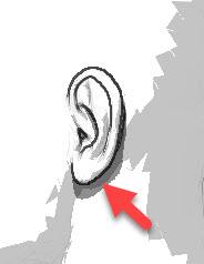耳甲介による影