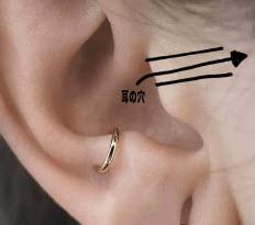 耳の穴の位置はどこ