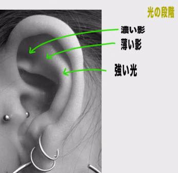 耳における光の段階