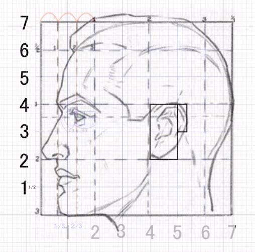 耳の位置の全体像