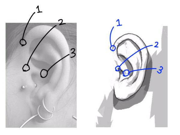耳の描画はどこからはじまるのか?