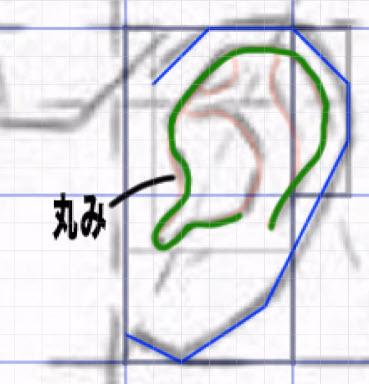 耳珠の丸み