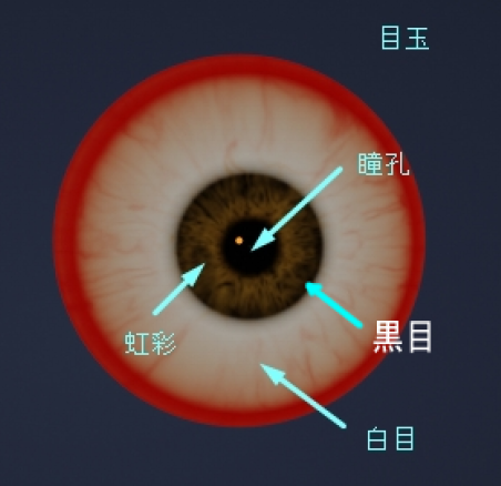 黒目、白目、瞳孔、虹彩