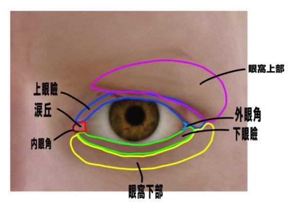 眼球の周りの皮膚の名前