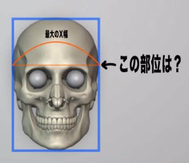 頭蓋骨において最大の幅を持つ部位