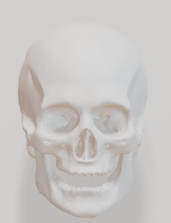 顔の線はなぜ生じるのか?
