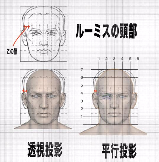 側頭窩の幅について