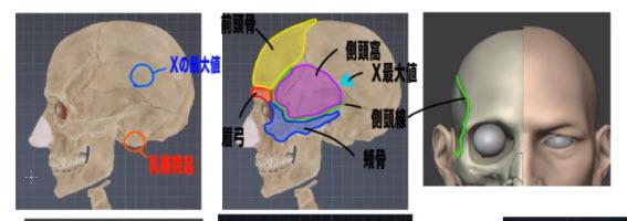 頭蓋骨の最大X値