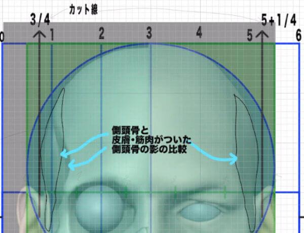 側頭窩のメルクマール