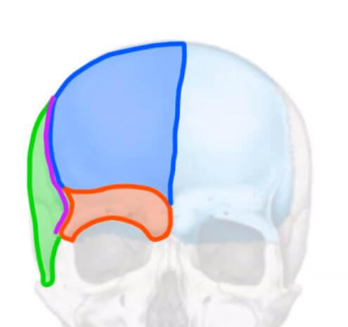 眉弓の定義について