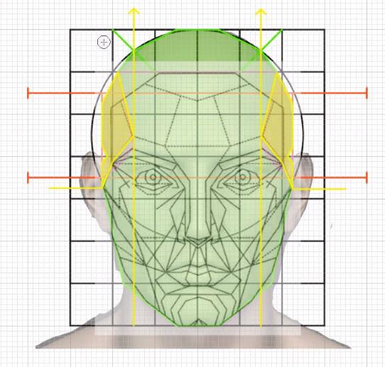 側頭線の構成