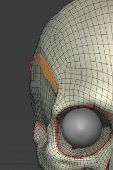 側頭窩の膨らみ