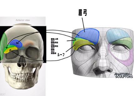眉弓の分類