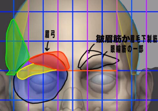 眉毛の構造について